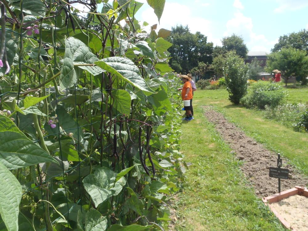 Agriculture urbaine et fablab